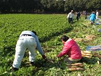 いずみ園農作業