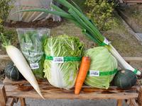 川内自興園野菜
