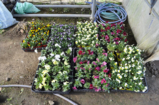農作物・園芸商品1